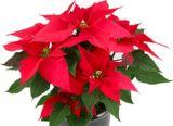 Obrázek k aktualitě Vánoční prázdniny.